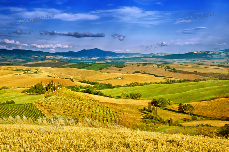 Val d'Orcia in atmopsheric summer light, San Quricio, Tuscany, Italy