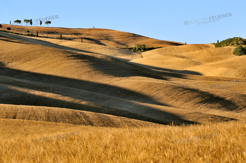 cornfields on rolling hills with long shadows seams like dunes in evening light, Tuscany, Italy