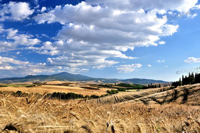 Kornfelder der Toskana im Abendlicht