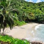 Palmenstrand der Seychellenn